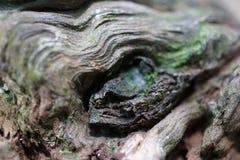 Découpes en bois Images libres de droits
