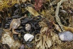 Découverte de Beachcombing Fond d'image marin et côtier de débris images libres de droits