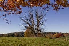 Découvrez l'arbre fait face dans le paysage automnal photos stock