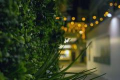 Découvrez mais la vie de nuit vivante photos stock