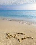 Décrivez sur les mouettes volantes du sable deux Photo stock