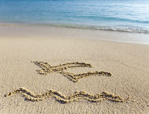 Décrivez sur les mouettes volantes du sable deux Photographie stock libre de droits