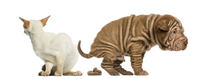 Défecação do cão e gato enojado Imagem de Stock Royalty Free