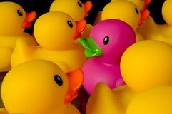 Défi à être différent - canards en caoutchouc sur le noir Image libre de droits