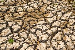 Déficit de l'eau de sol de ressort Image stock