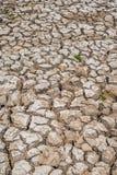 Déficit de l'eau de sol de ressort Photographie stock