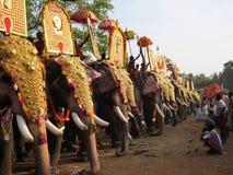 Défilé d'éléphant d'Asie Images libres de droits