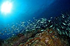 Défilé de poissons Photos libres de droits