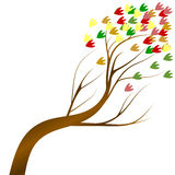 Défoliation colorée d'automne d'arbre Photos stock
