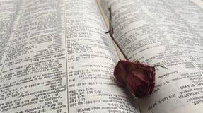 Défraîchi s'est levé dans un livre Photo stock