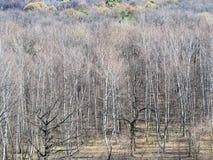 Dégagement au bord de la forêt nue au printemps images libres de droits