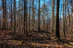Dégagement au milieu de la forêt photographie stock