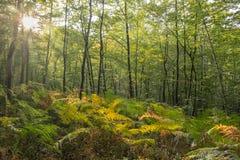 Dégagement au milieu de la forêt en automne image stock