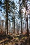 Dégagement au milieu de la forêt et du soleil image libre de droits