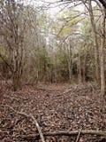 Dégagement dans la forêt photographie stock libre de droits