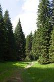Dégagement dans la forêt Photographie stock