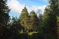 Dégagement dans la forêt photo libre de droits