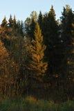 Dégagement dans la forêt photos libres de droits