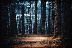 Dégagement dans les bois images libres de droits