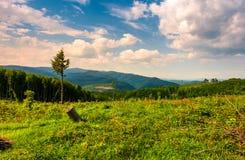 Dégagement de forêt sur le flanc de coteau photos stock