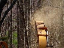 Dégagement de la forêt photos stock