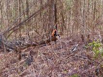 Dégagement de la forêt images stock