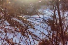 Dégel tôt de ressort dans la forêt photo libre de droits