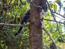Déjenos Hang Out In el árbol imagen de archivo