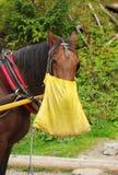 Déjeuner de cheval Images stock