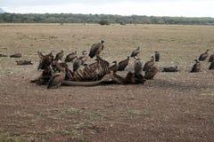 Déjeuner de vautours Photo libre de droits