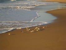 Déjeunez à l'aube - la vie sur les plages du Brésil images stock