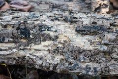 Délabrement en bois de termite Image stock