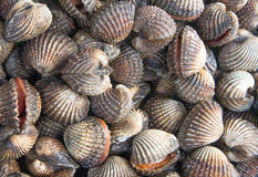 Délicatesses de fruits de mer de feston telles que des coques de la Thaïlande photos stock