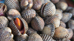 Délicatesses de fruits de mer de feston telles que des coques de la Thaïlande Photo libre de droits