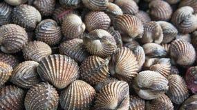 Délicatesses de fruits de mer de feston telles que des coques de la Thaïlande Image libre de droits