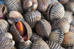 Délicatesses de fruits de mer de feston telles que des coques de la Thaïlande image stock