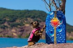 Délivrance de chien de bull-terrier du Staffordshire dans l'eau Photos stock