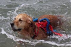 Délivrance en mer avec des chiens Photo stock