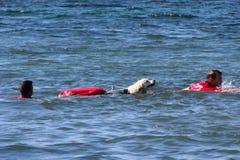 Délivrance en mer avec des chiens Photographie stock
