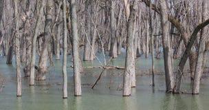 Déluge du fleuve Mississippi photos stock