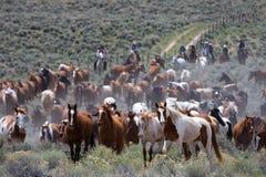 Déménager le troupeau Photo libre de droits