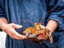 Démo de Maine Lobster Boat, comment-au crochet et au homard de bande du piège, homard tenu dans la main photographie stock