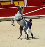 Démonstration de cheval de dressage dans le bullring de P Photos stock