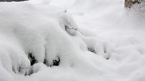 Dépôts de neige sur des buissons banque de vidéos