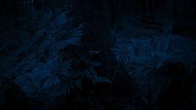 Dépassement des fougères par l'arbre dans l'obscurité banque de vidéos