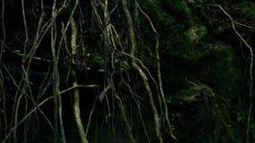 Dépassement des racines d'arbre banque de vidéos