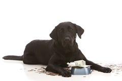 Dépenses de chien image libre de droits