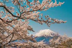 Déplacement au Japon en avril Admirer en grande partie la beauté des fleurs de cerisier chez le mont Fuji La pleine floraison C'e photographie stock