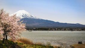 Déplacement au lac de kawaguchiko pour admirer la beauté des fleurs de cerisier chez le mont Fuji mi-avril La pleine floraison images libres de droits