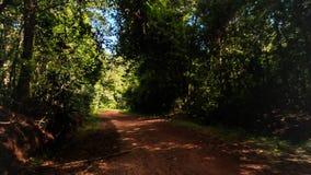 Déplacement le long de l'ombre Sunny Ground Road dans la forêt tropicale banque de vidéos